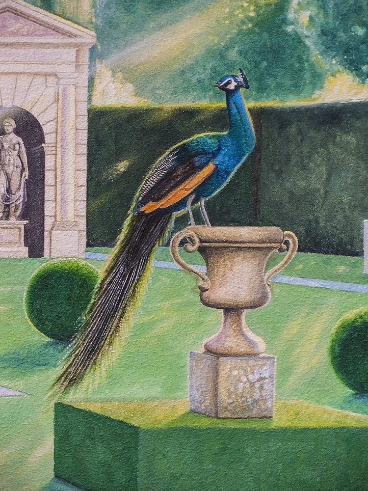 peacock-detail